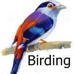 link-to-birding-tours