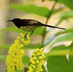 Birds of Doi Inthanon 4
