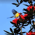 Birds of Doi Inthanon 3