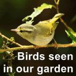 List of birds-seen-in-our-garden